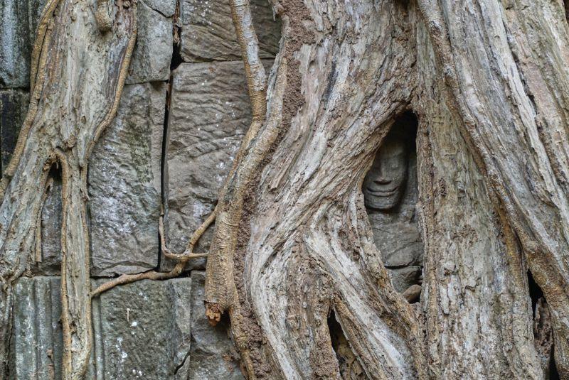 Angkor überwuchertes Relief